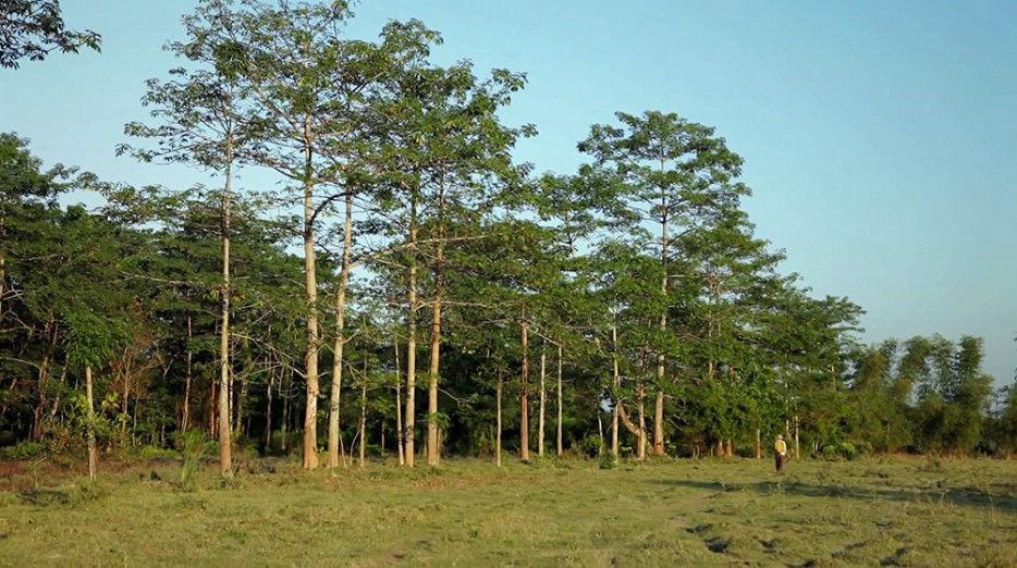 印度一岛民坚持种树35年,将550公顷荒岛变森林--置顶表情