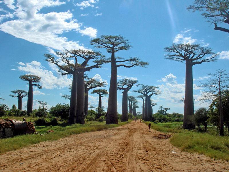 8个与众不同的森林,像来自外星球