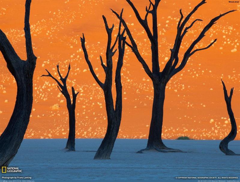 8个与众不同的森林,像来自外星球--置顶表情