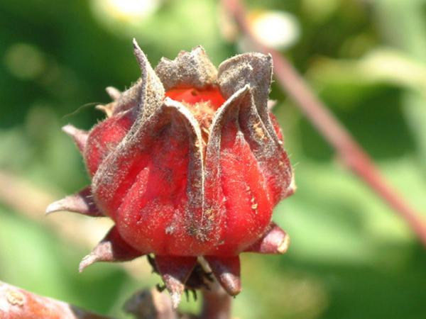 20种不常见但很好吃的怪异水果,非洲角瓜绝对是吃货的追求--置顶表情